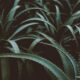 'Versatile solution': Aloe vera has some surprising benefits; find out what